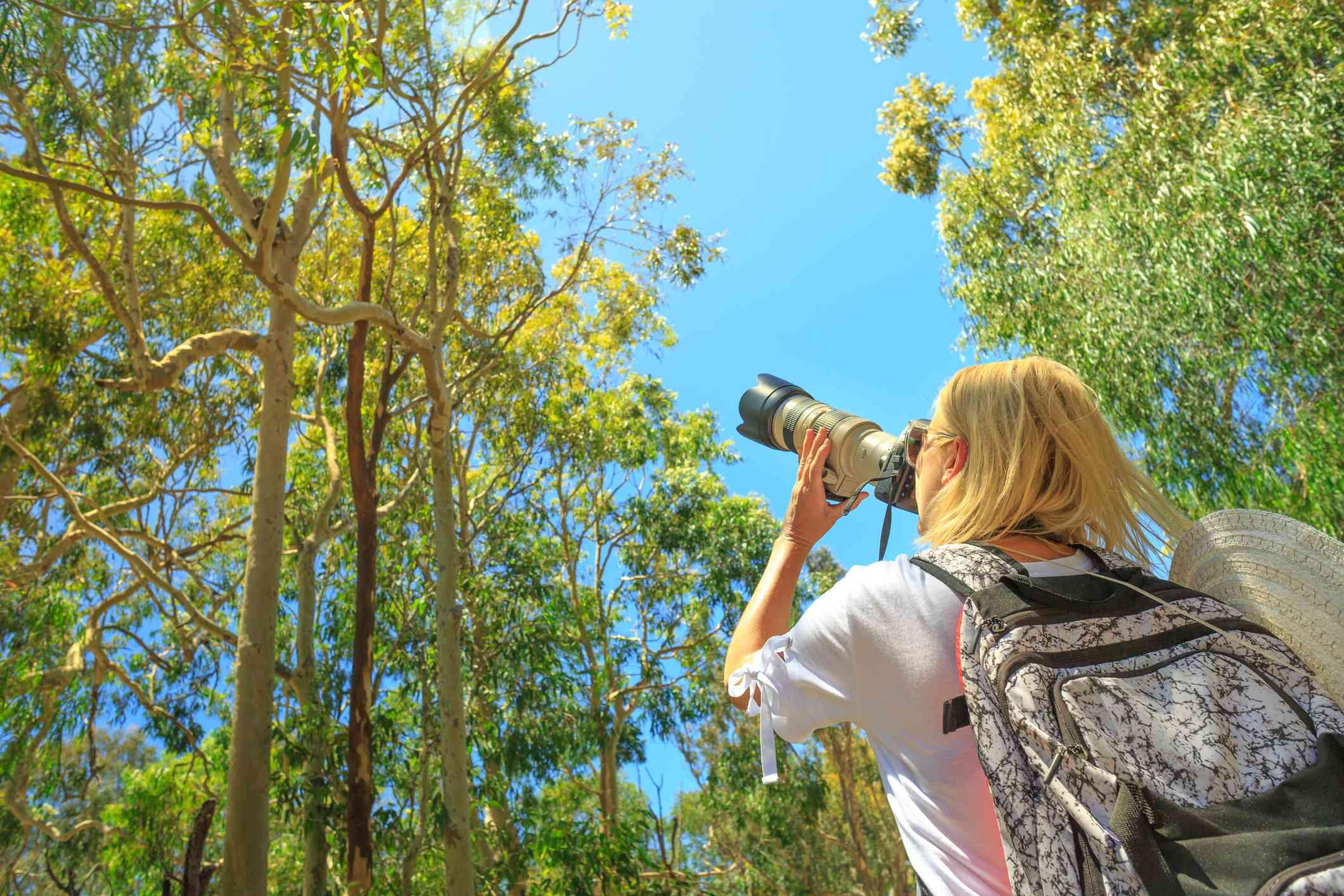 Fotógrafo de la naturaleza con Koala