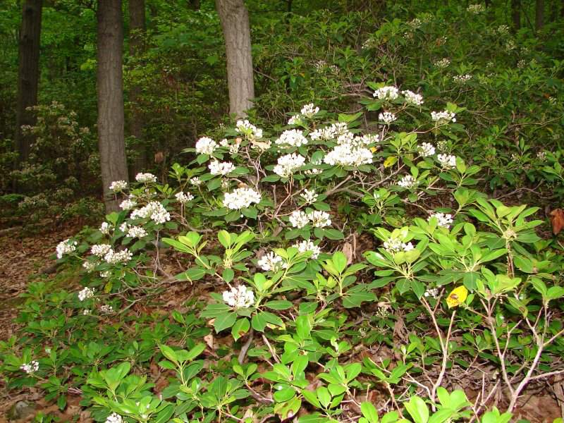 Flowers at Sugarloaf Mountain
