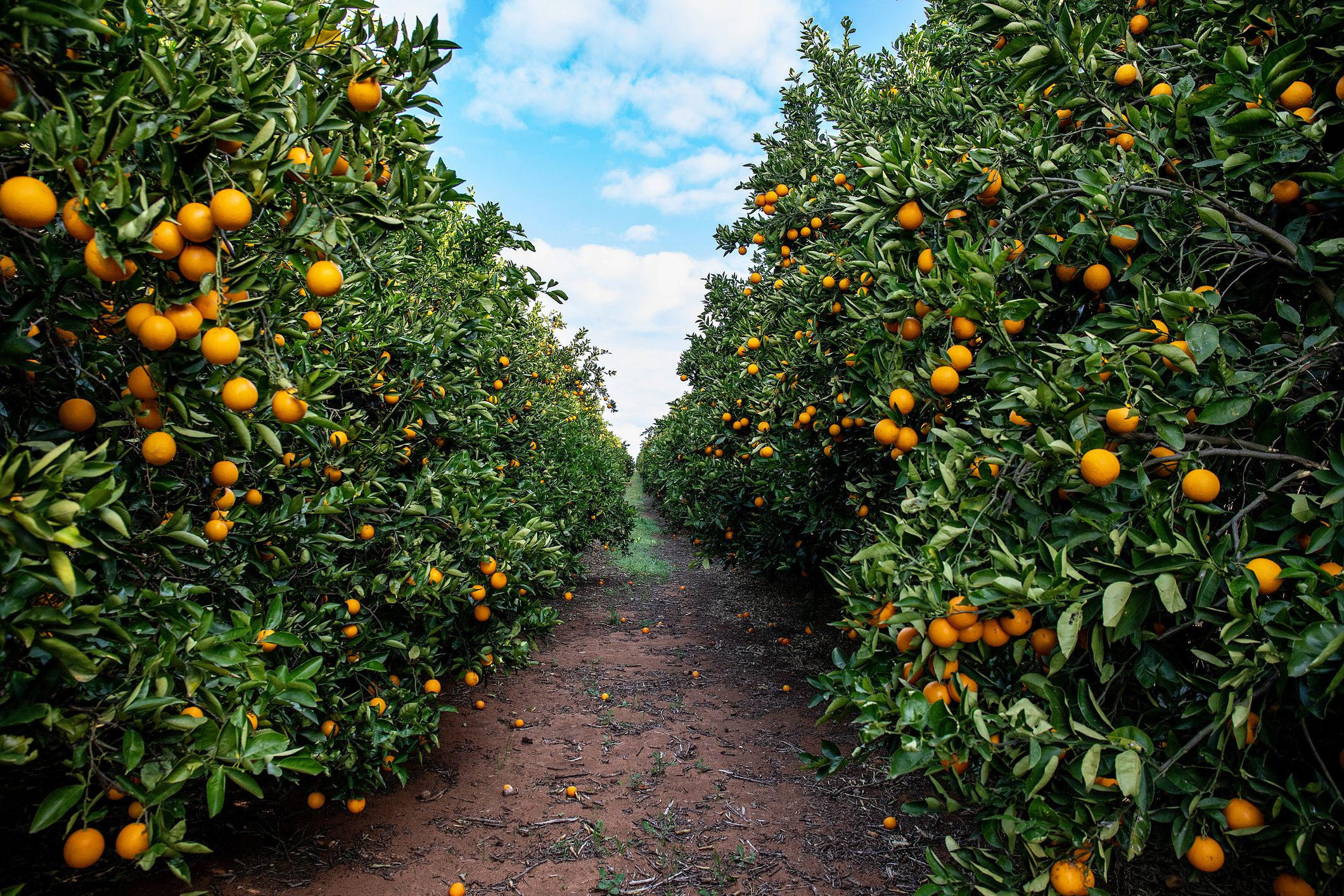 Pick Your Own Farms And Orchards In Northern Virginia