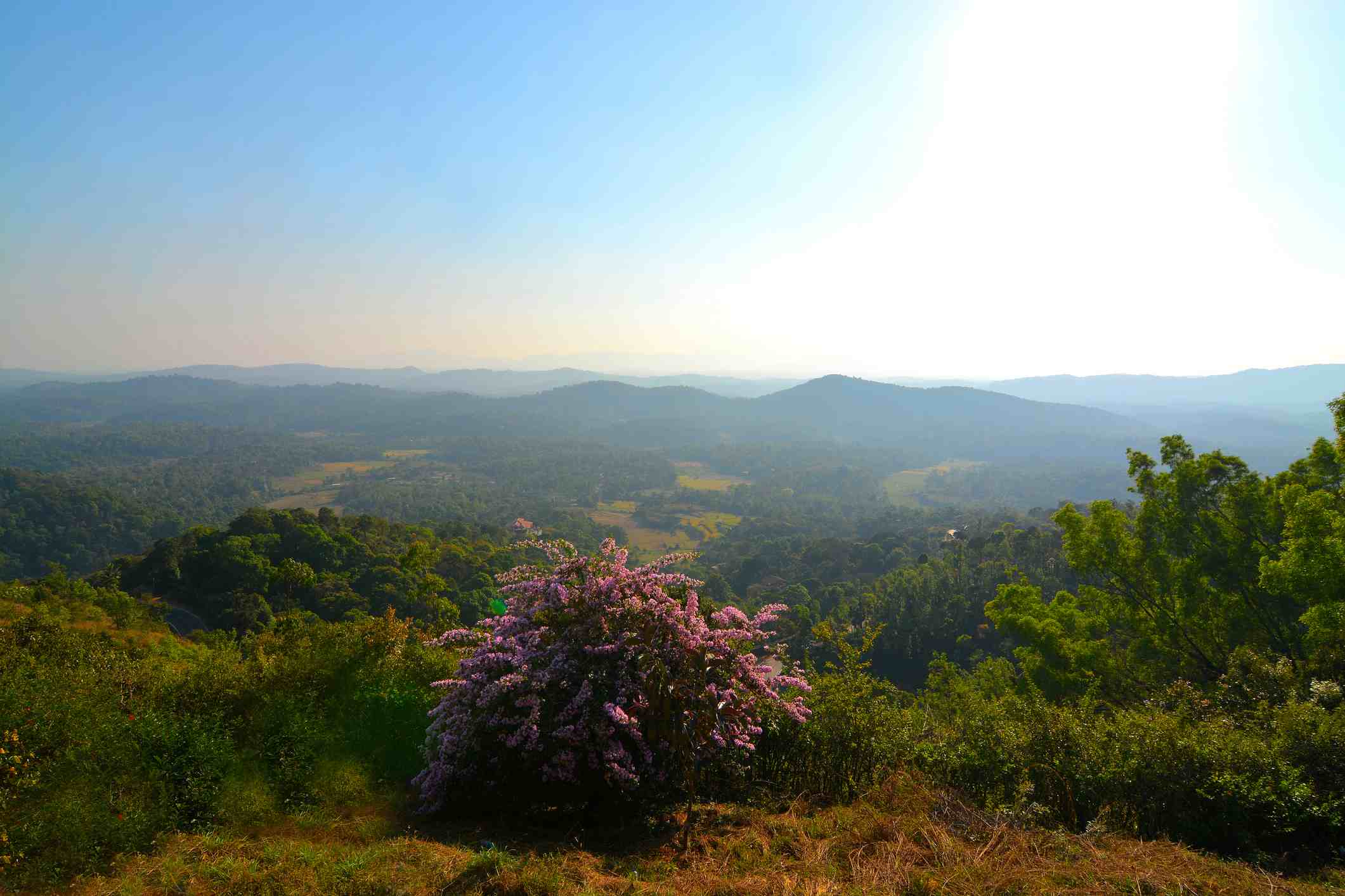 Coorg landscape.
