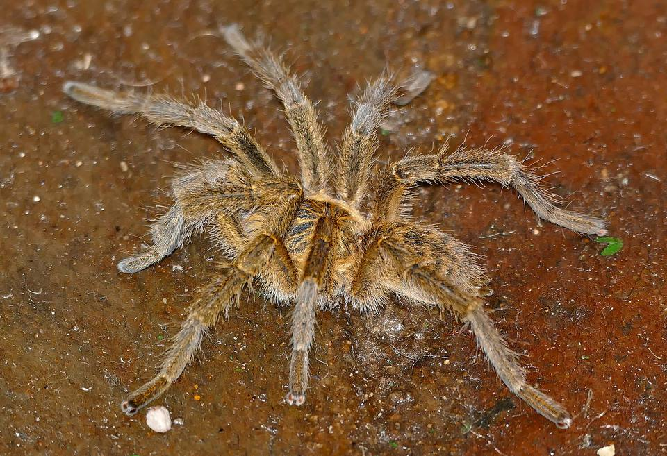 8 Of Africa S Scariest Spider Species