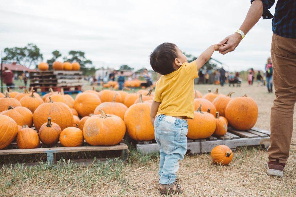 Child with pumpkins at Fall Festival