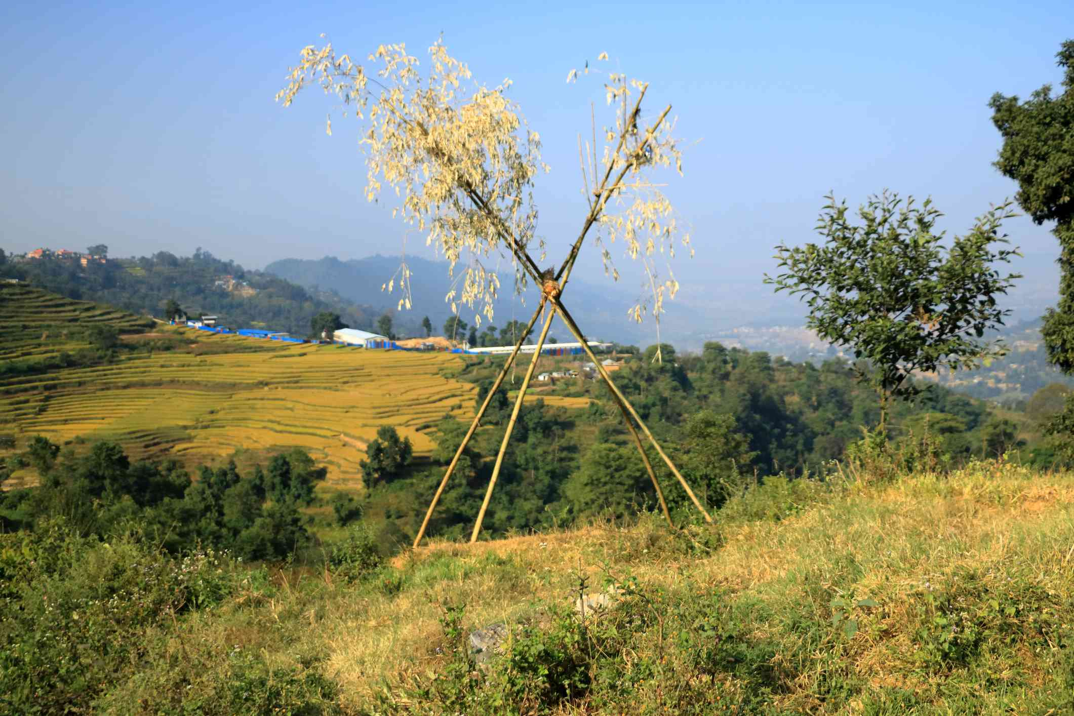 bamboo poles strapped together to create a swing amid grassy fields and terraced farmland