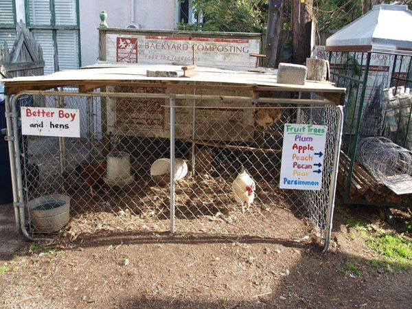 Renfrow's Hardware Store chickens