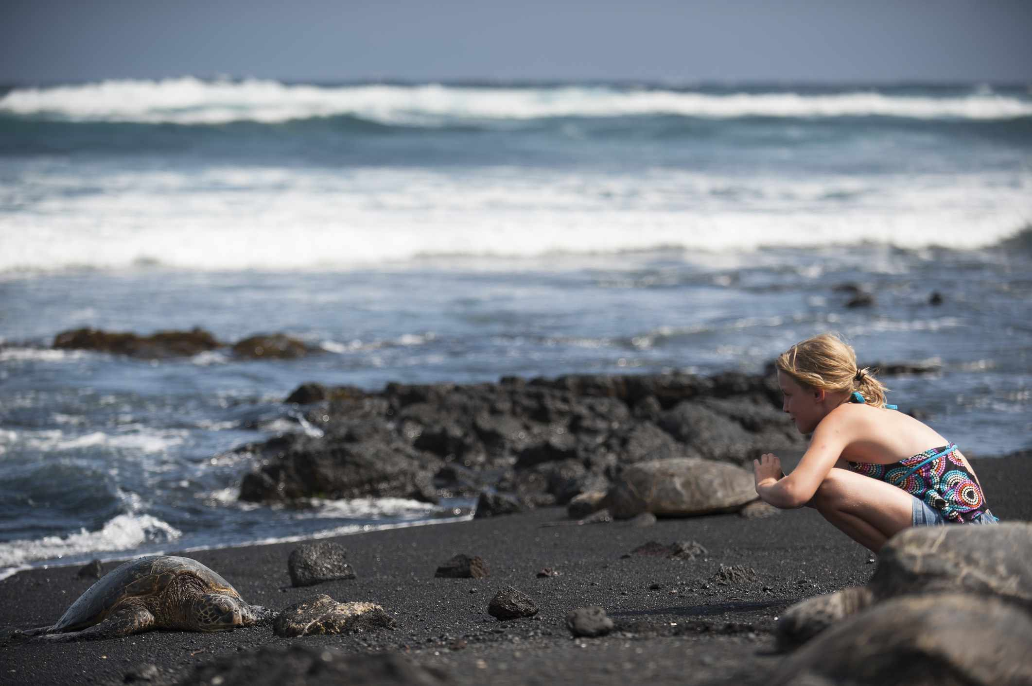 Green Sea Turtle on the Beach, Punaluu Beach Park, Kau District, Big Island of Hawaii