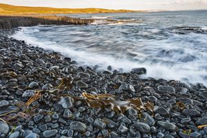 stony beach with seaweed and wave crashing to shore