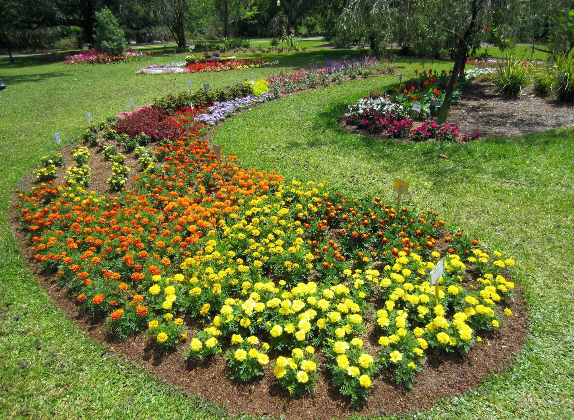 flowers at Harry P. Leu Gardens