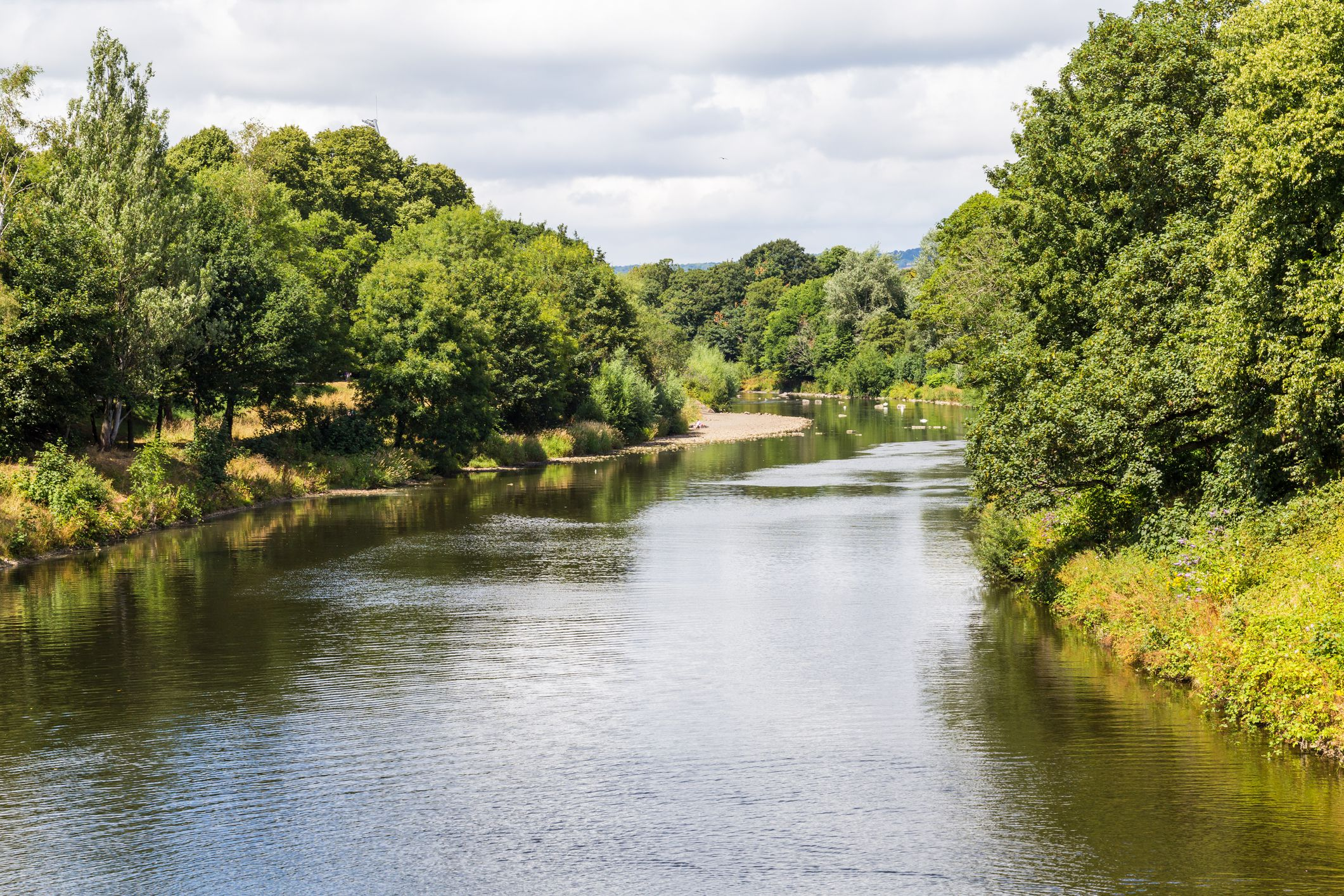 Taff River runs through Bute Park in Cardiff city center