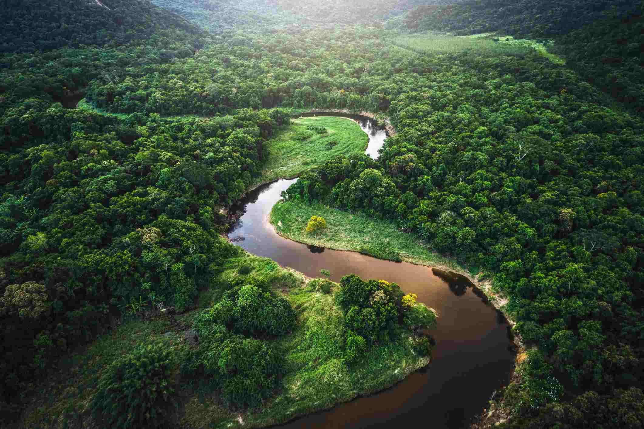 Amazon Rainforest, Basin, Brazil