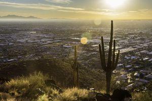 Cactus in the hills above Phoenix Arizona in fall