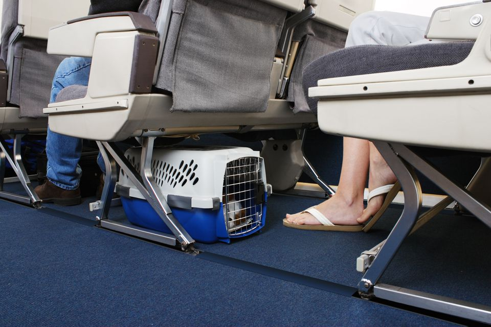 small dog inside a hard plastic pet carrier placed underneath an airplane seat