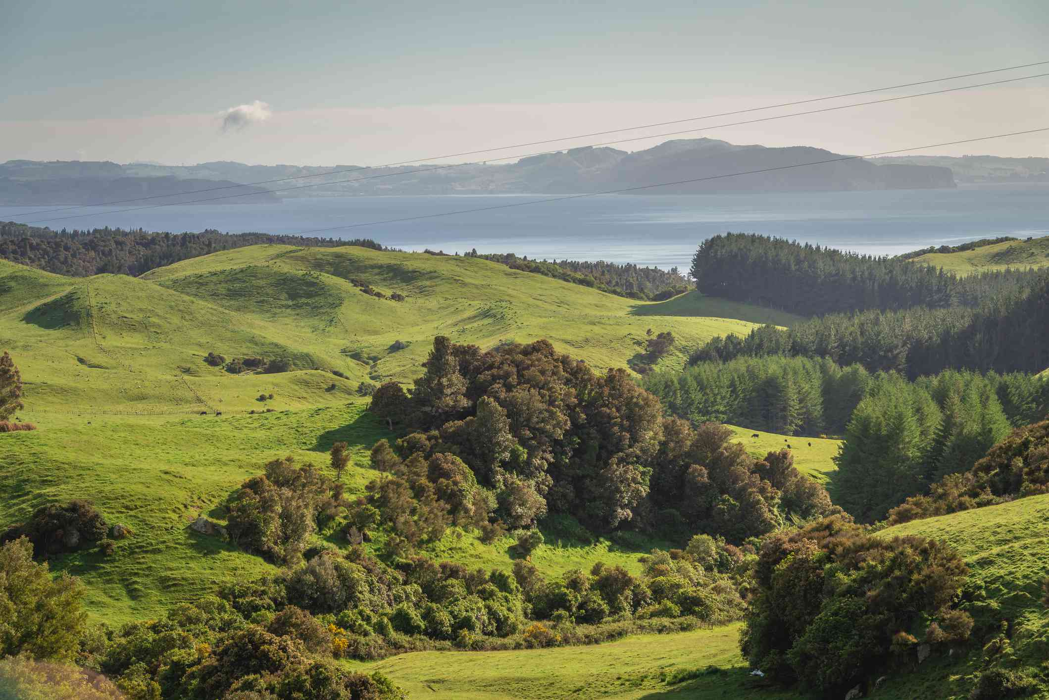 Green hills by Lake Taupo with dense clusters of trees