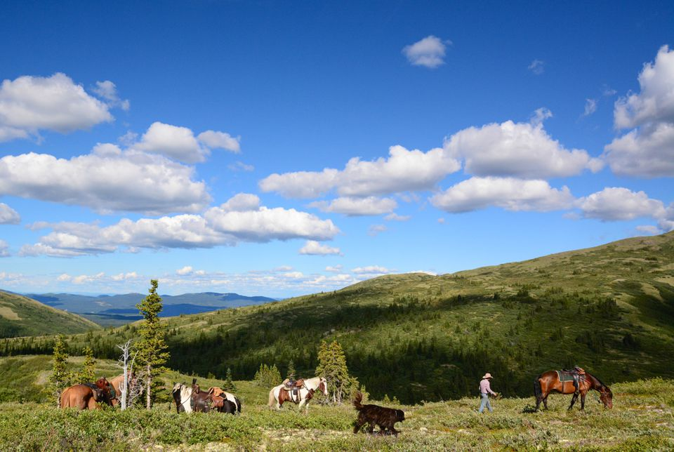 Exploring Canada's Yukon Territory on Horseback
