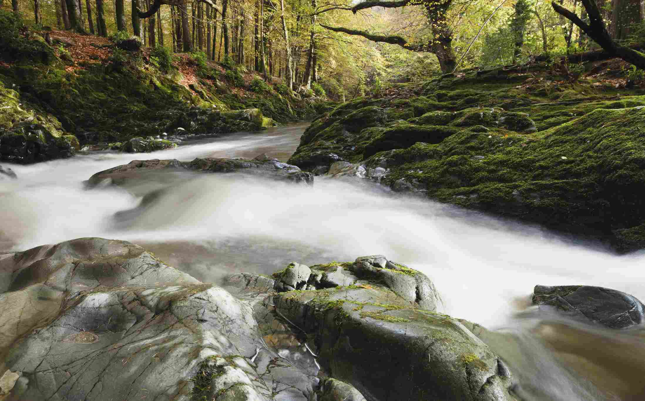 Water in Tollymore Forest