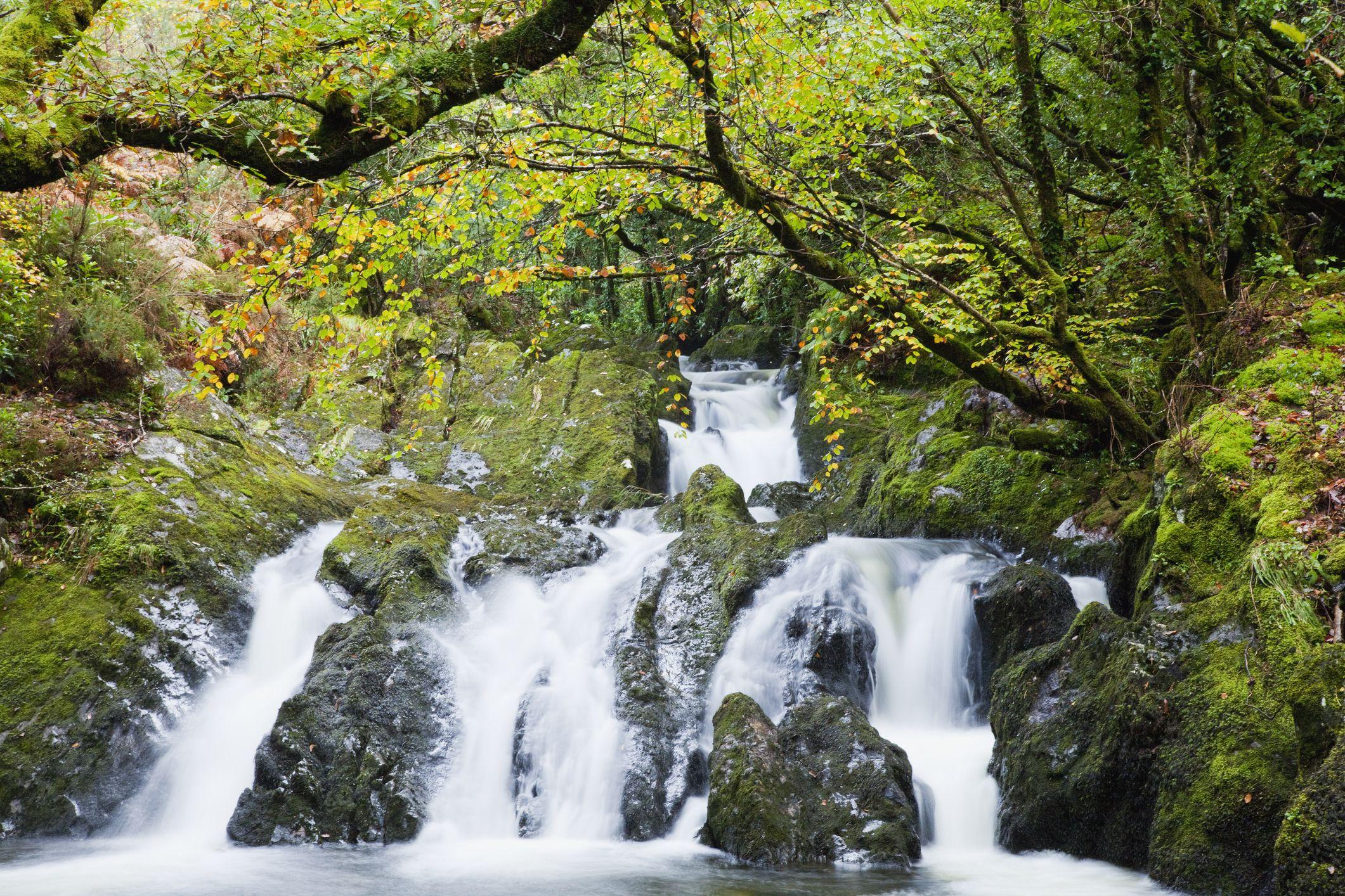 Glengarriff Woods Nature Reserve Beara Peninsula