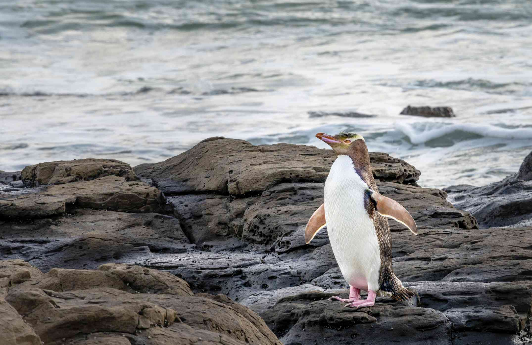 penguin standing on rocks with sea behind