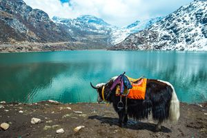 Tsangmo Lake in Sikkim, India