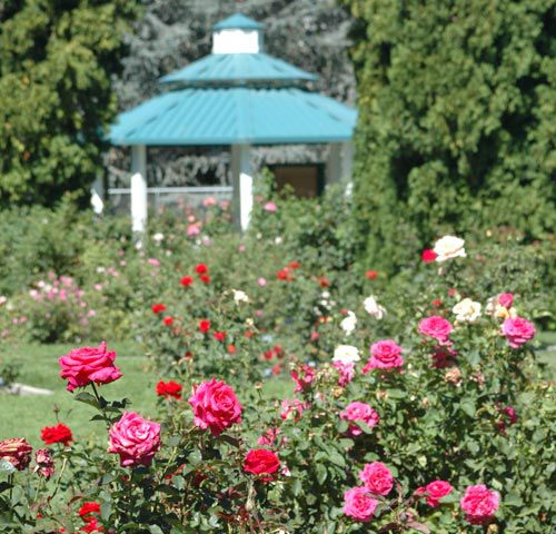 Reno Municipal Rose Garden at Idlewild Park in Reno, Nevada