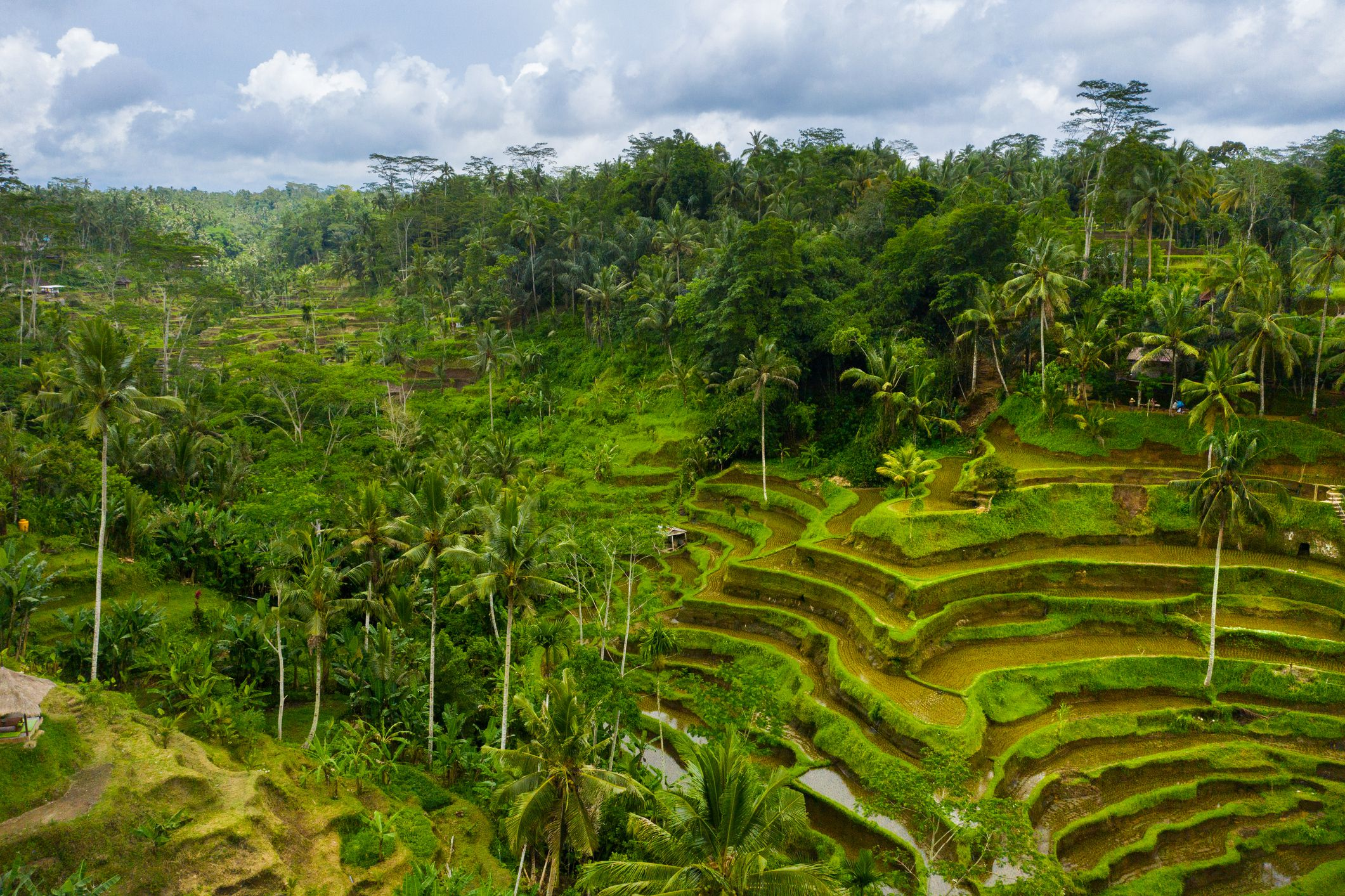 The Top 15 Things to Do in Indonesia