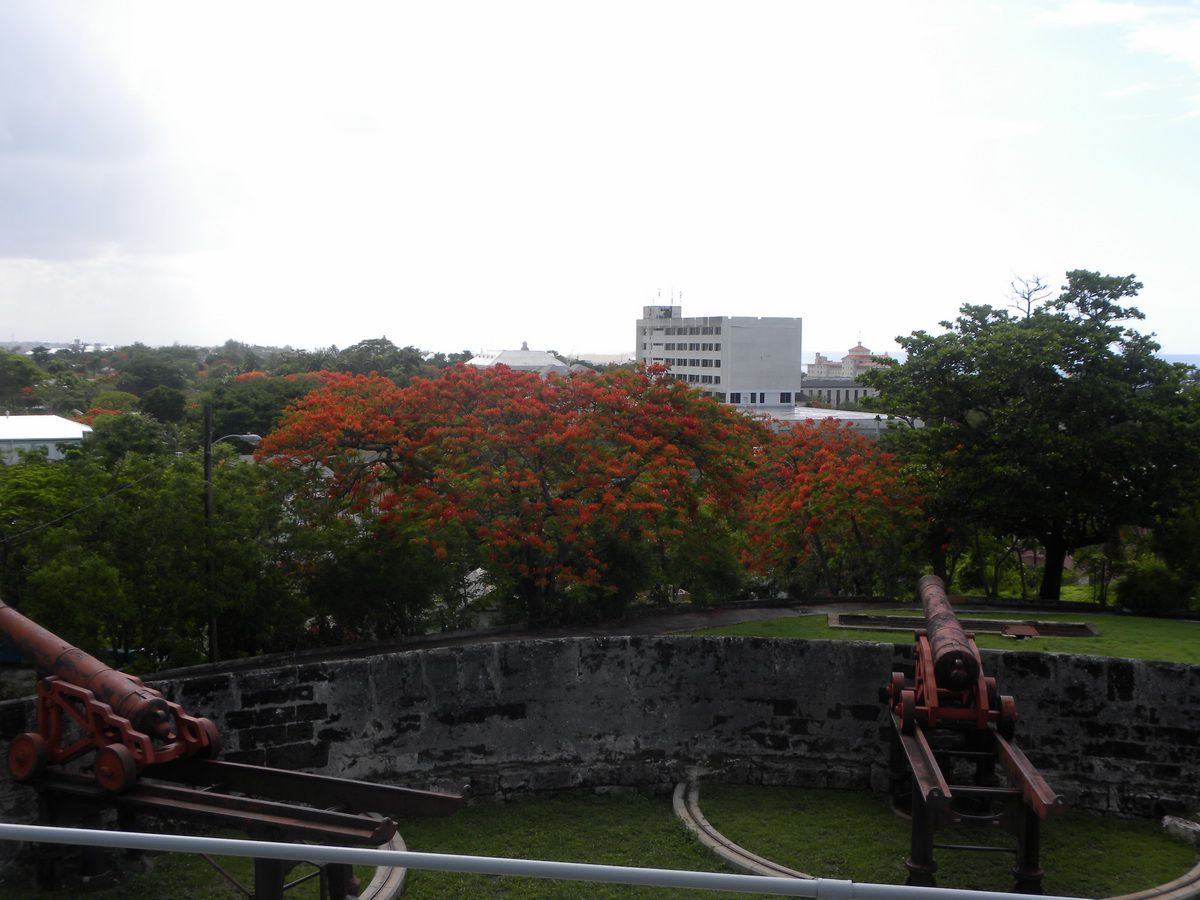 Poinciana at Fort Fincastle in Nassau, Bahamas