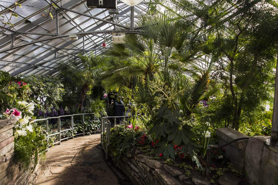 8fc9fd11046a Allan Gardens Conservatory: The Complete Guide