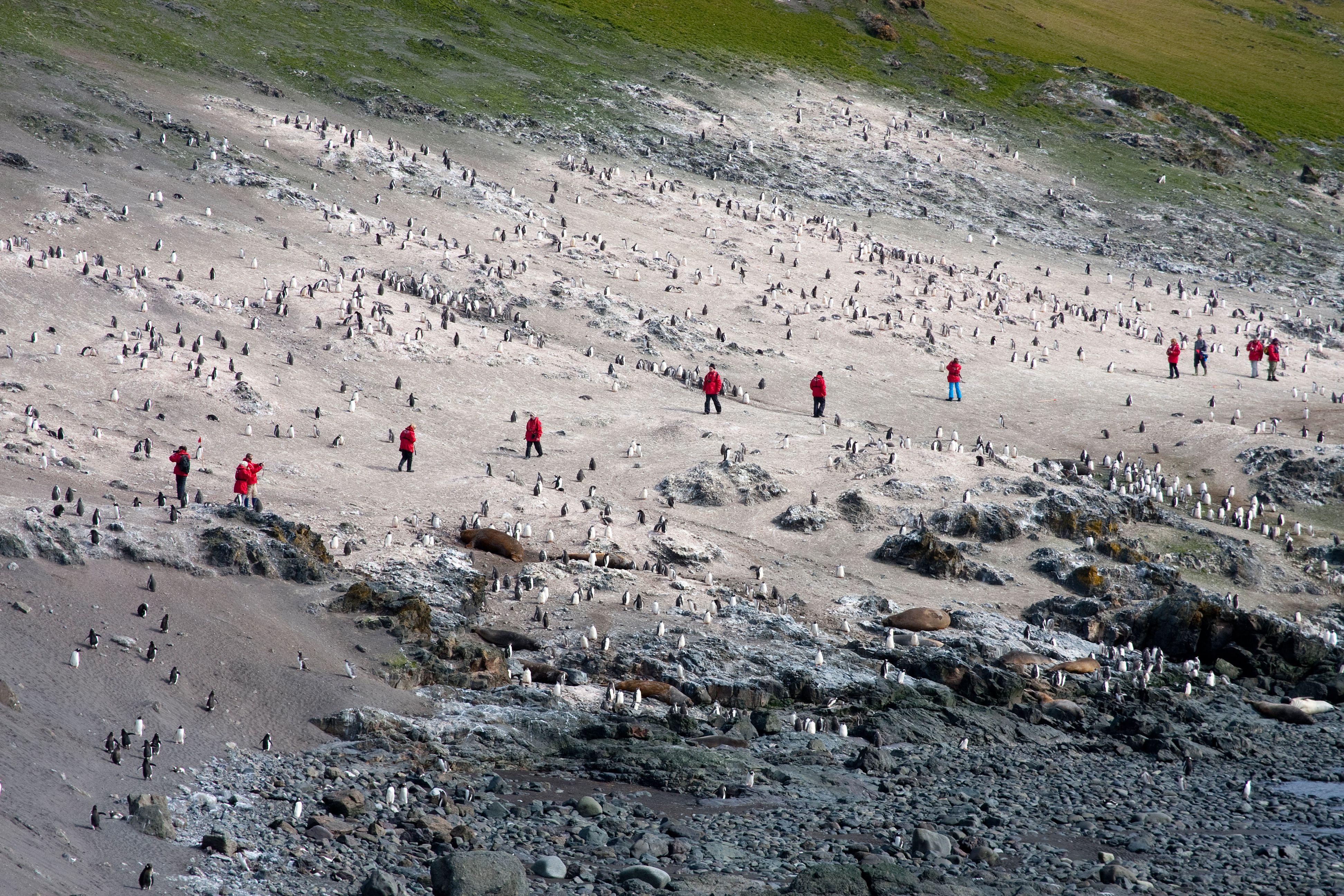 Signs of life on Antarctica coast