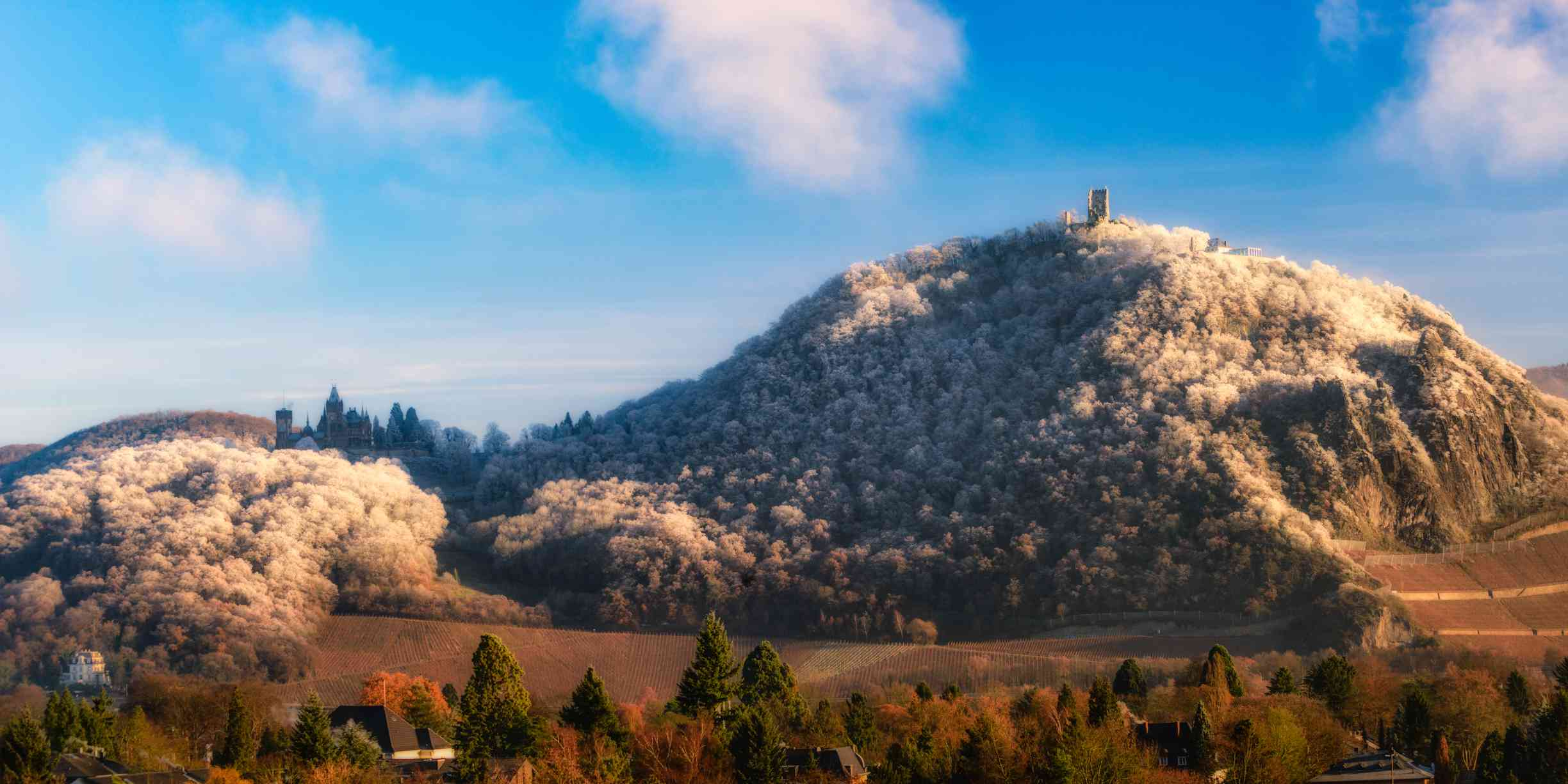 Godesburg castle near Bonn on top of hill with Cherry Blossoms