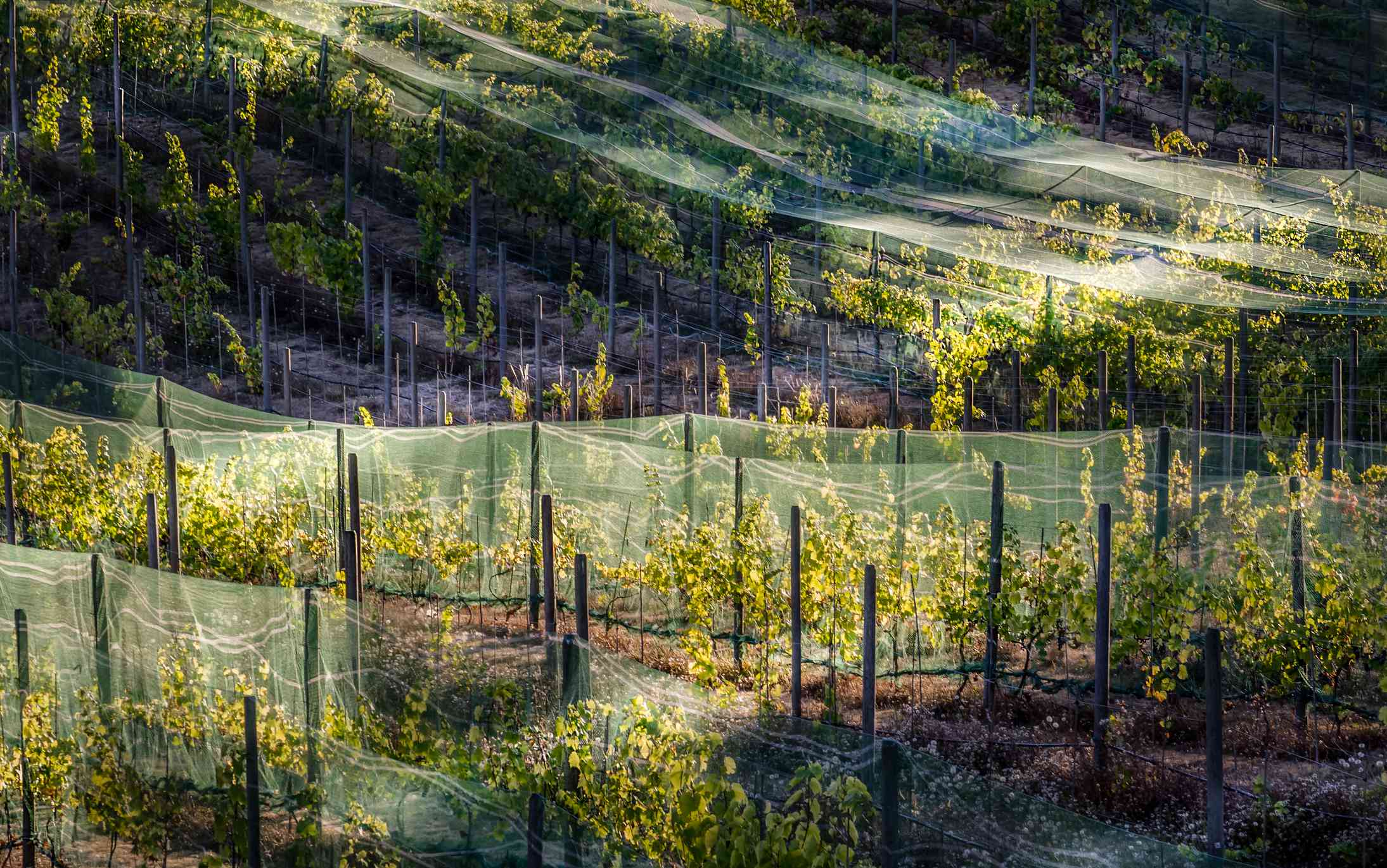 Cowichan Valley vineyard