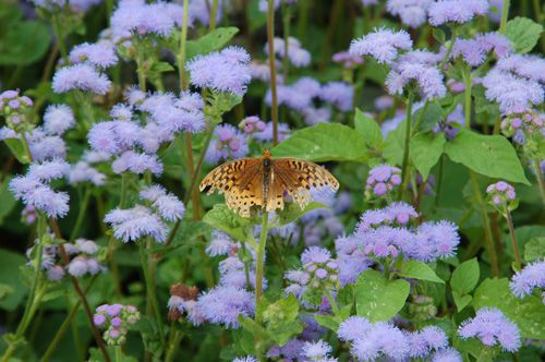White flower farm in litchfield ct photo tour photo of butterfly on a leaf at white flower farm store in litchfield mightylinksfo