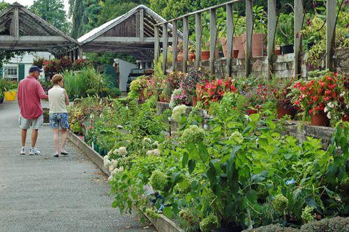 White flower farm in litchfield ct photo tour shopping at white flower farm litchfield ct mightylinksfo