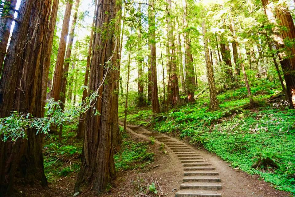Muir Woods National Monument in California