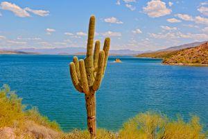 Saguaro cactus by Theodore Roosevelt Lake, Arizona, America, USA