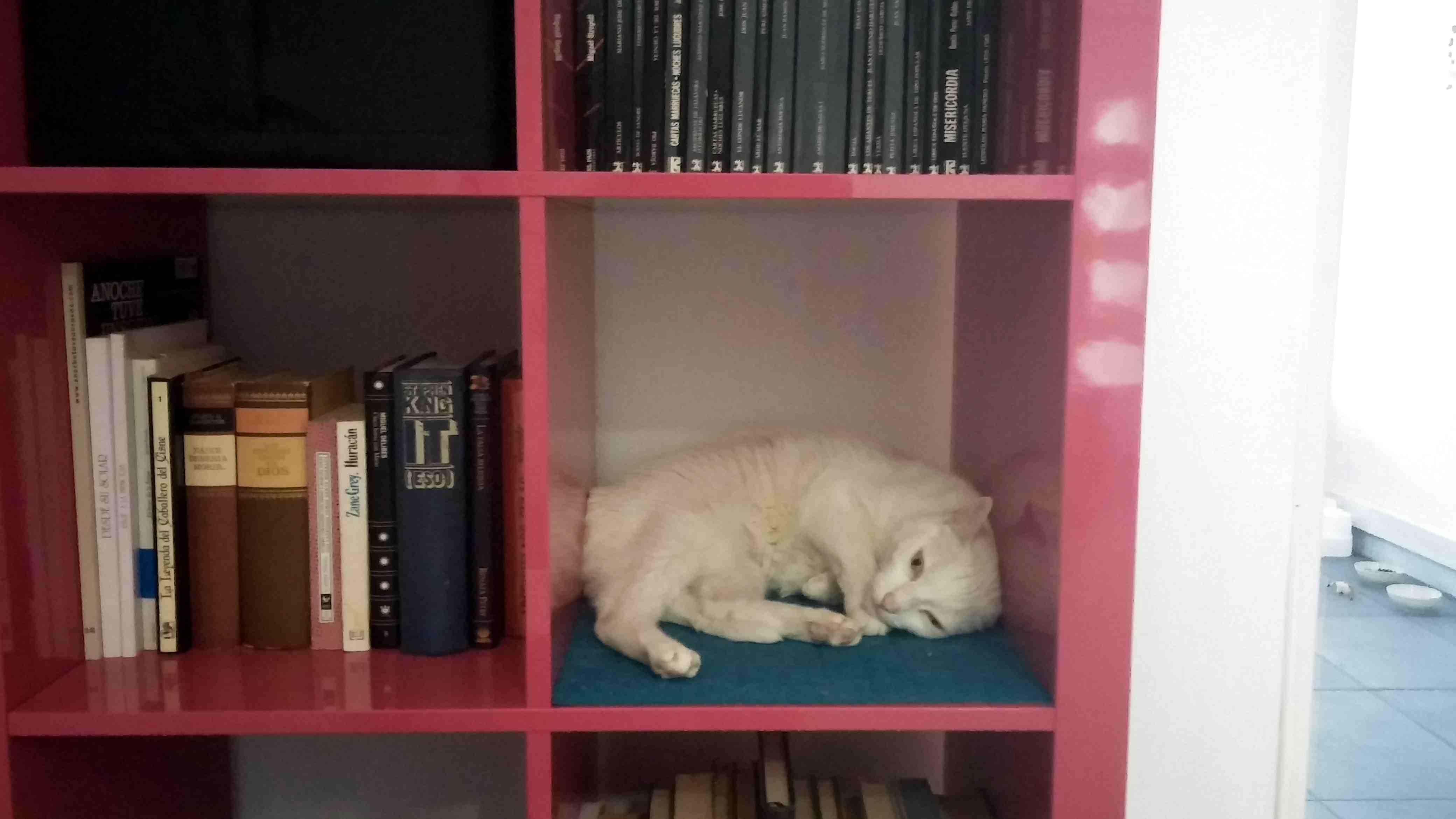 La Gatoteca Cat Cafe in Madrid