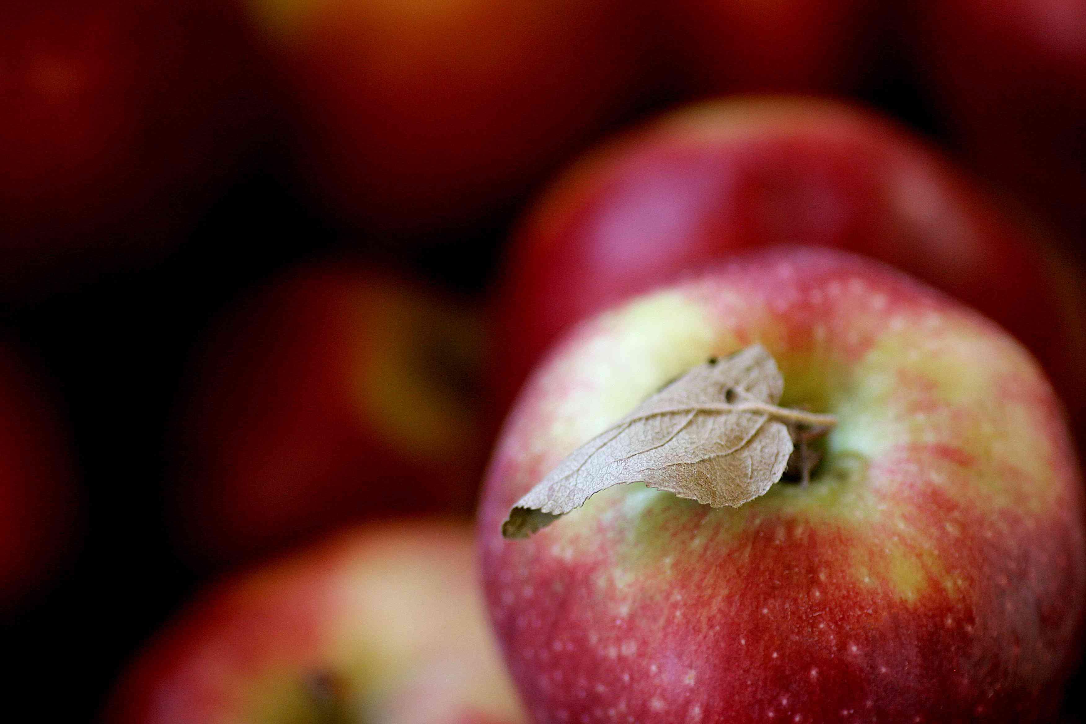 Vermont Apple