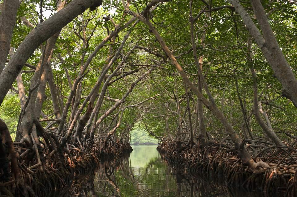 A channel through mangroves, Roatan, Honduras
