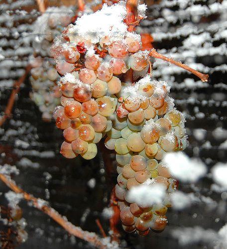Interesting Wines: Ohio Icewine