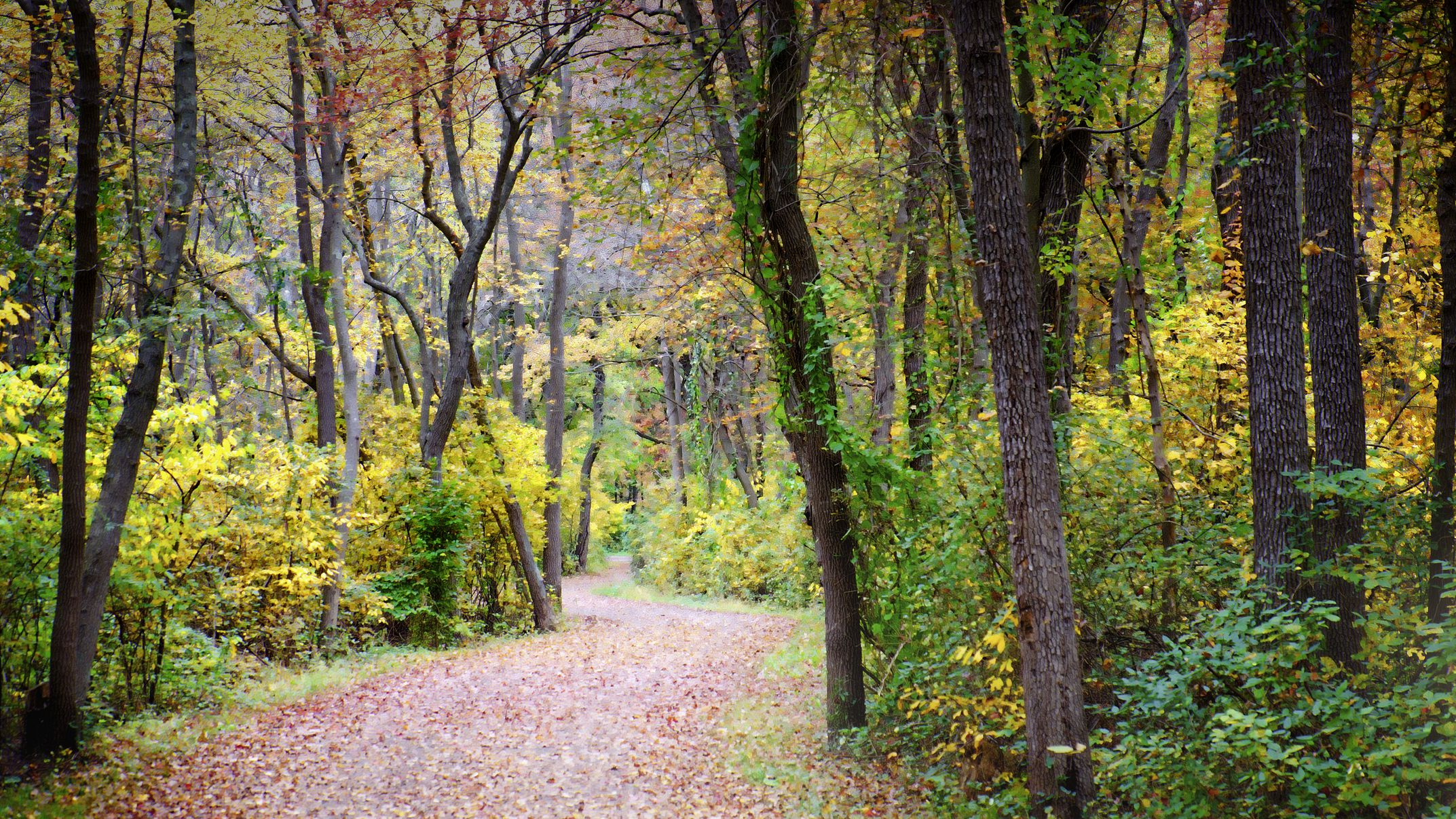 The Best Places to See Fall Foliage in Long Island