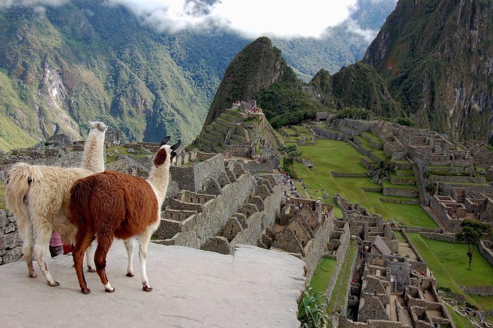 Llamas admiring Machu Picchu