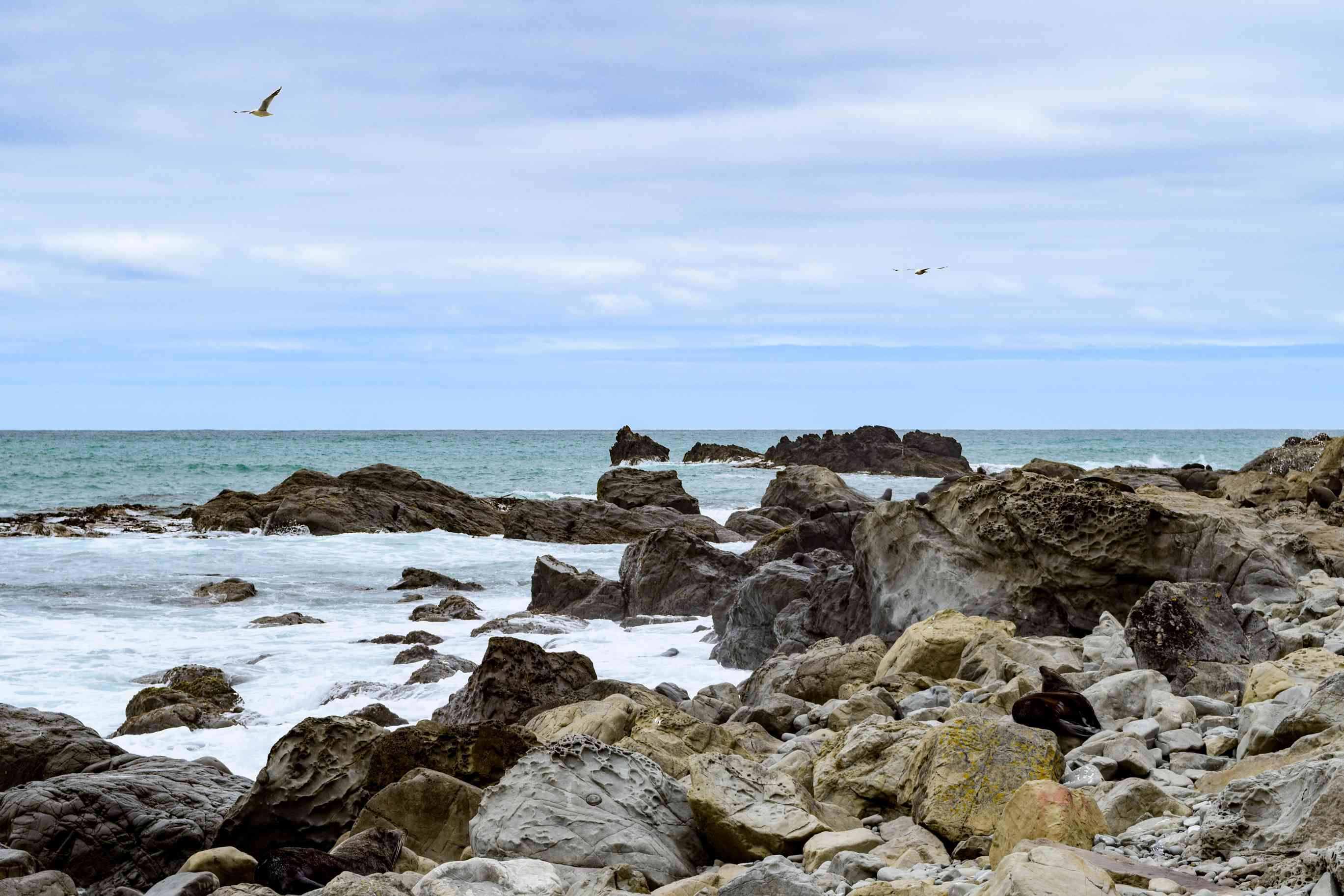 Rocky seaside of Kaikoura