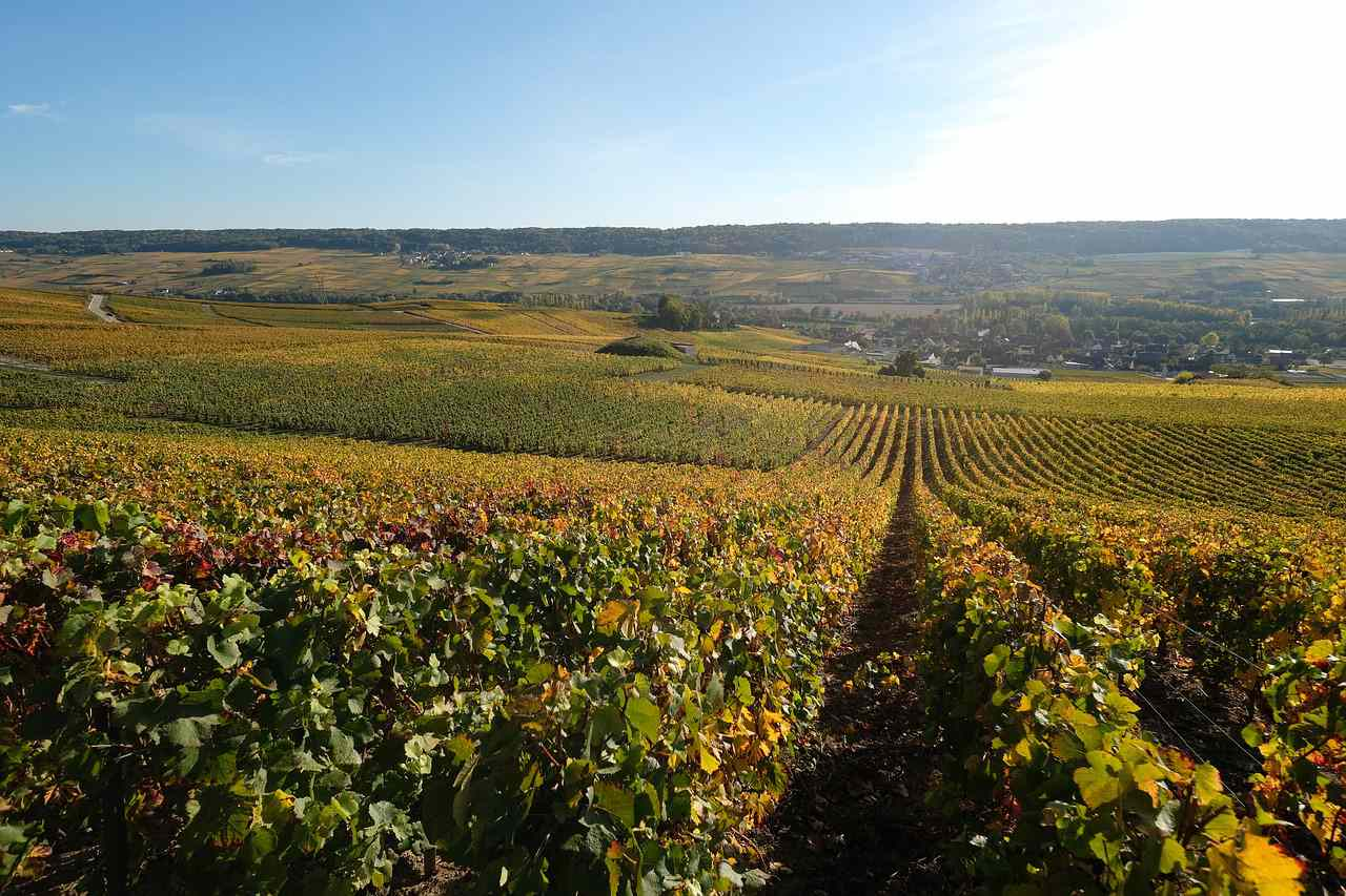 Vineyards in Champagne region of France
