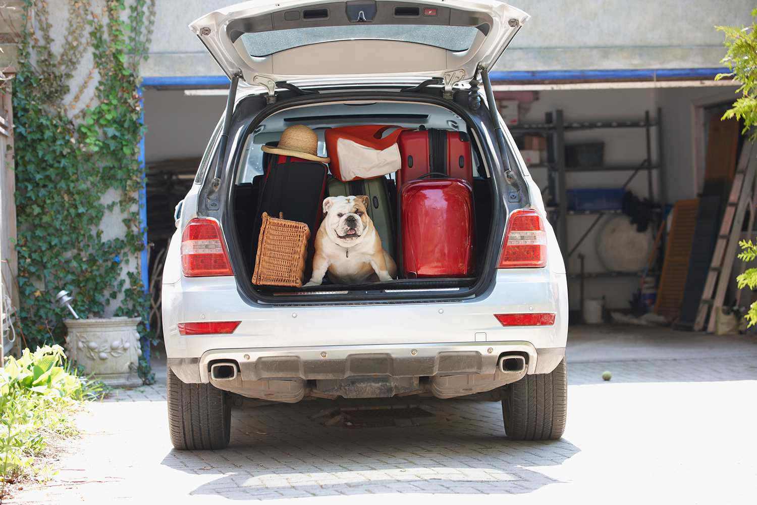 Car packed with a dog