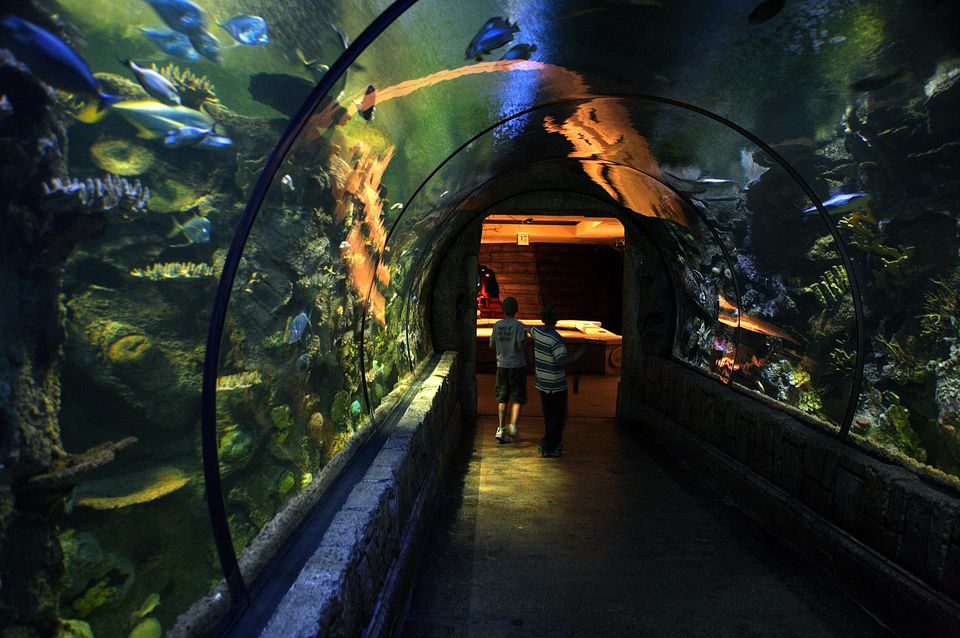 where to go scuba diving and snorkeling in aquariums