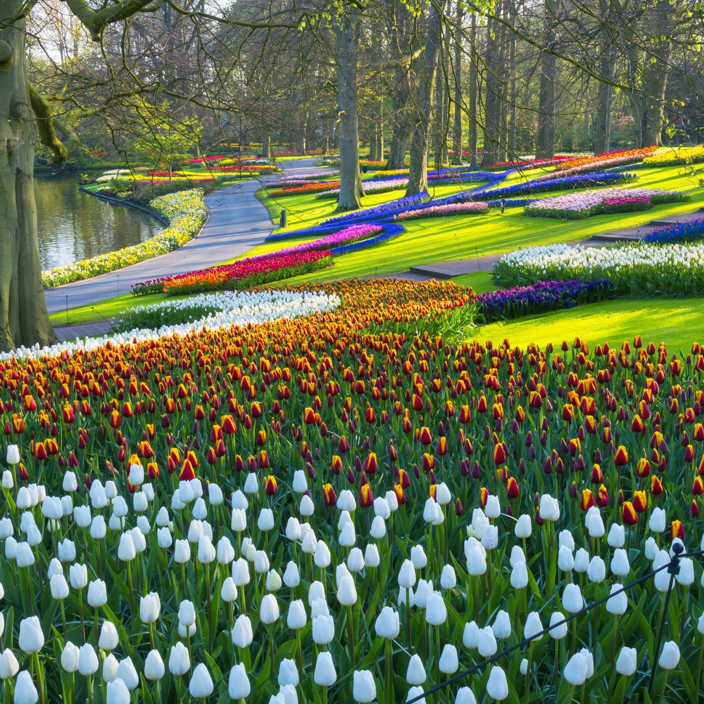 The 18 Best Things to Do in the Netherlands