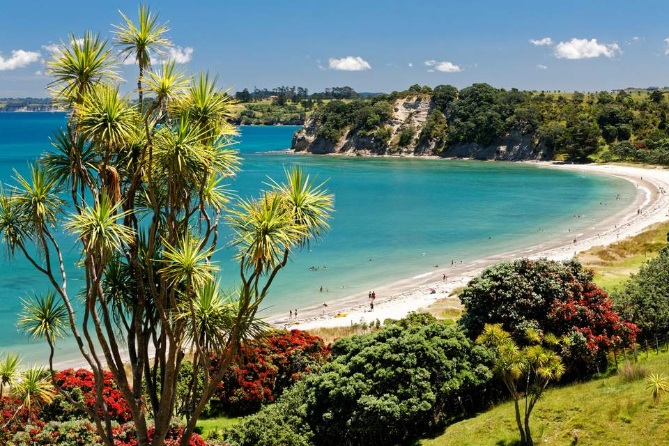 Wide angle elevated view past cabbage tree of Shakespear Regional Park's most popular beach