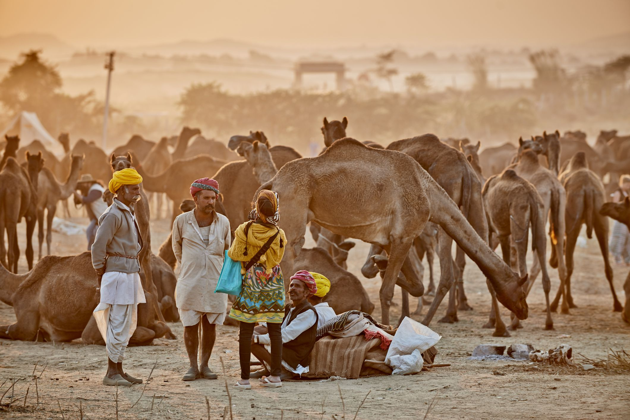 Traveling To India For The Pushkar Camel Fair