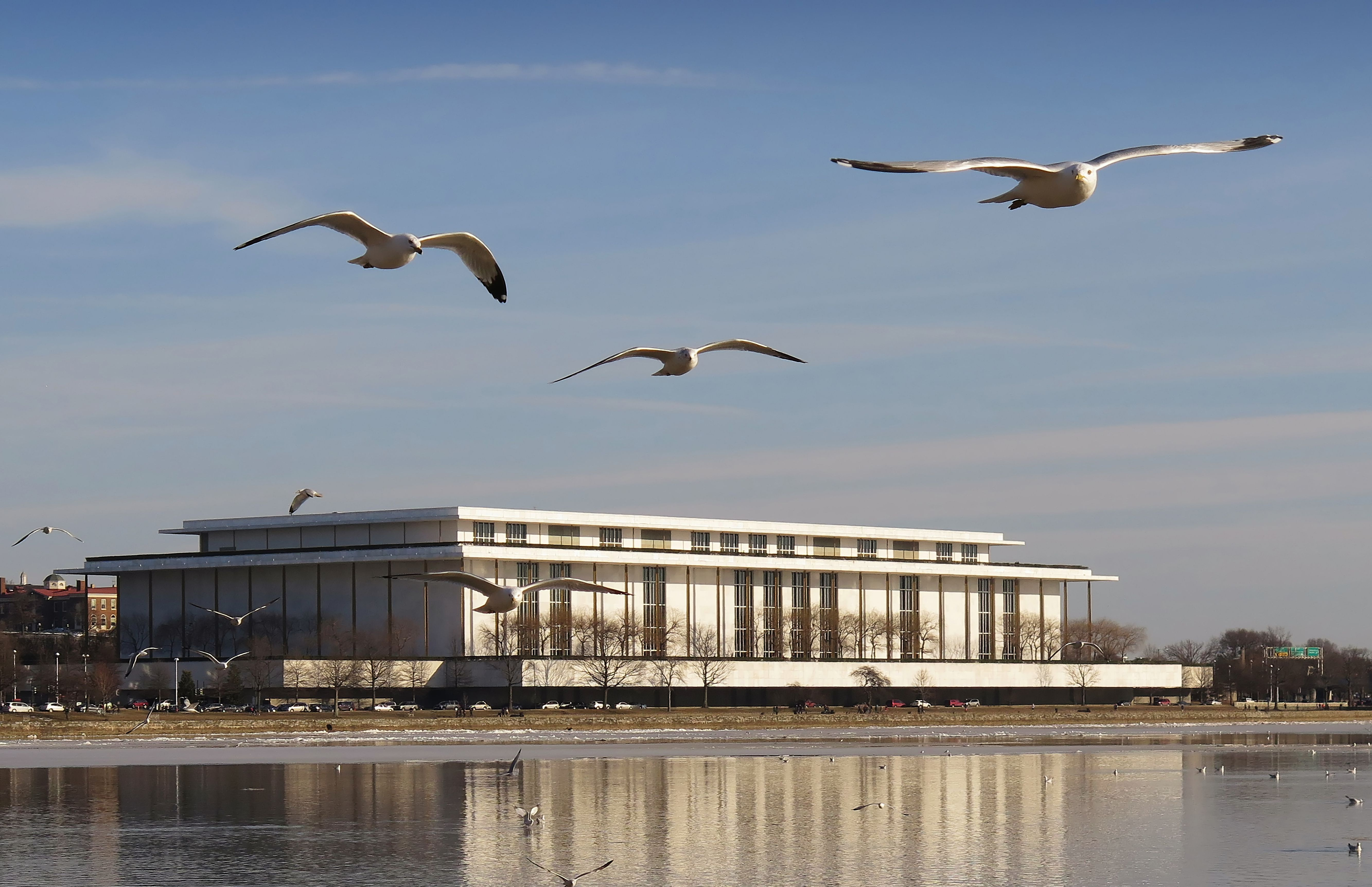 Seagulls fly in front of the John F. Kennedy Center for the Performing Arts, Washington DC