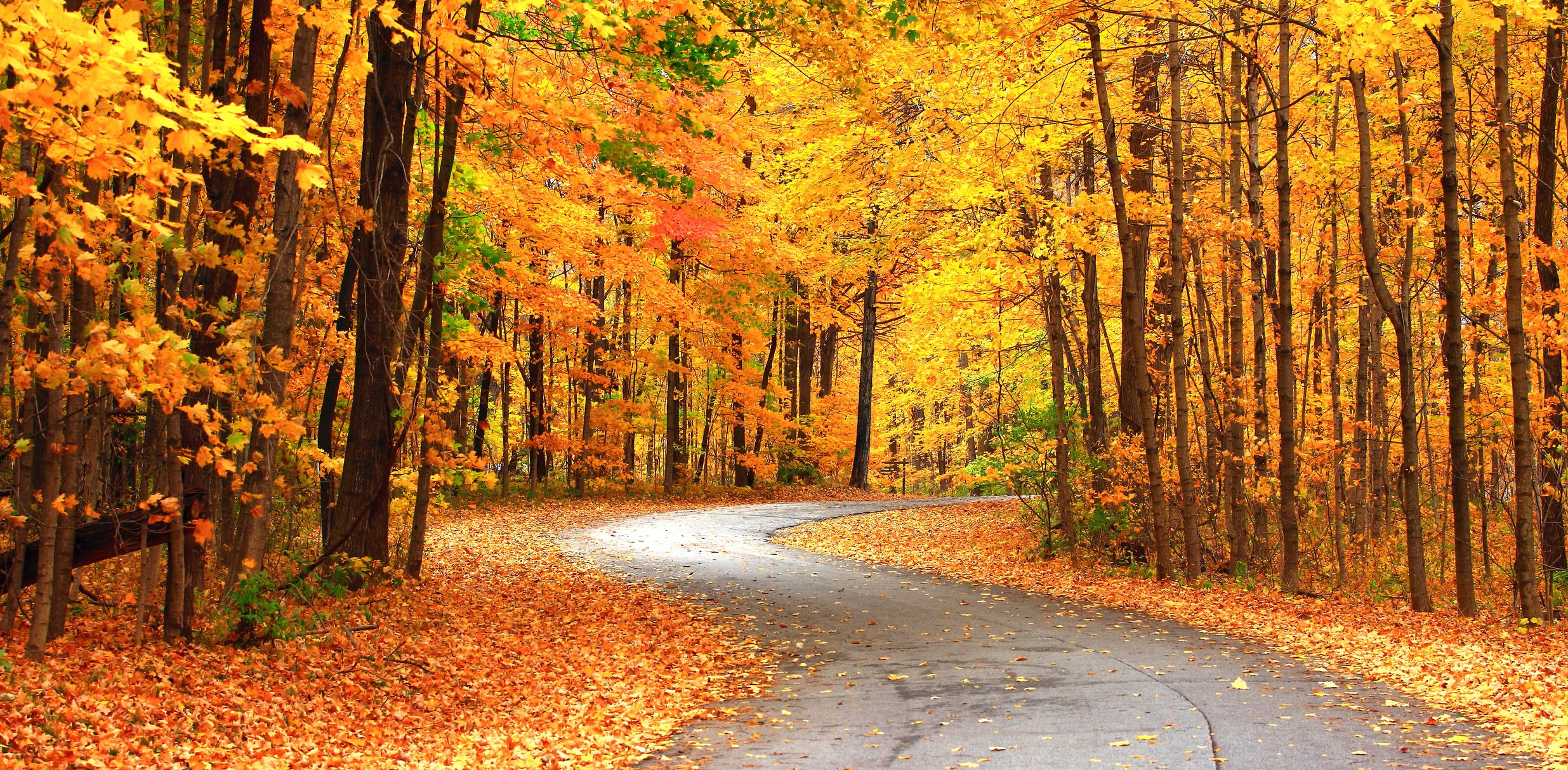 Moraine State Park peak fall color