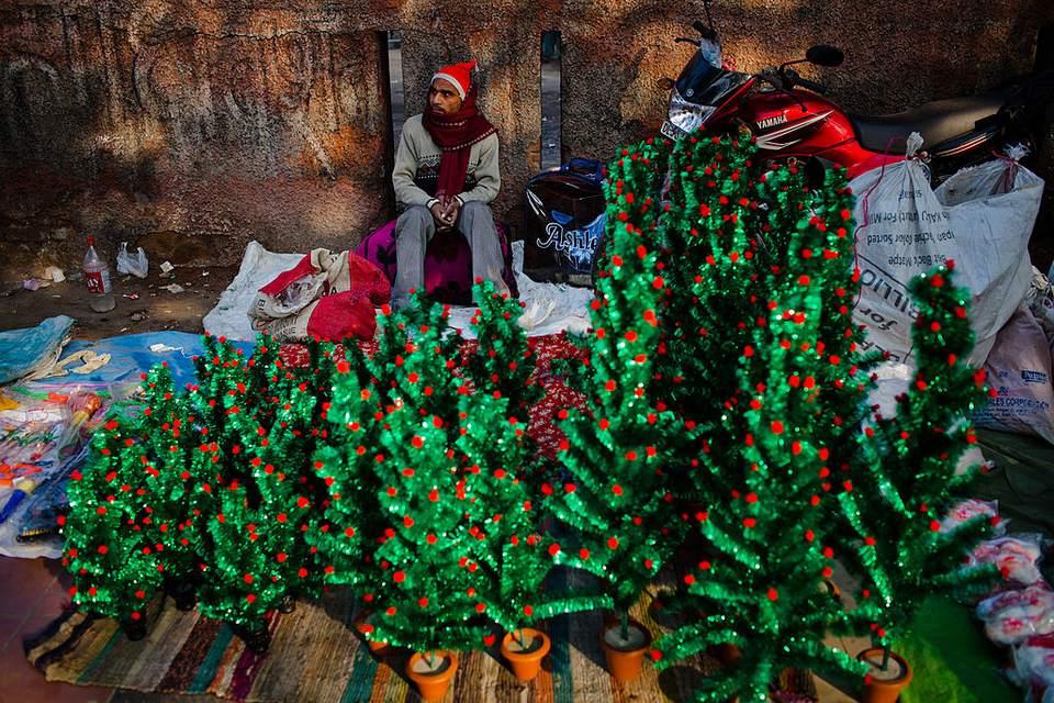christmas tree seller in delhi