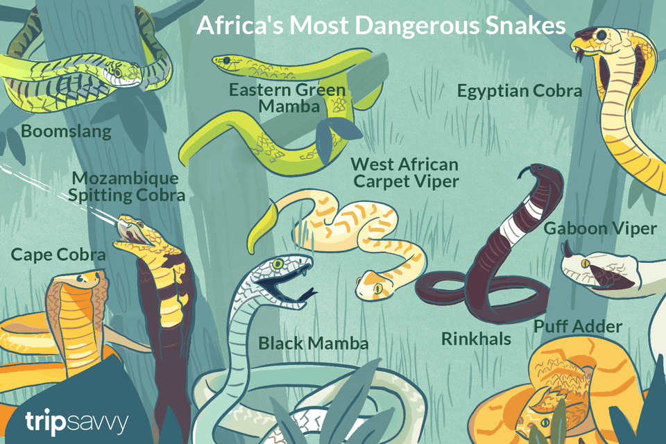 a top 10 list of africa s most dangerous snakes