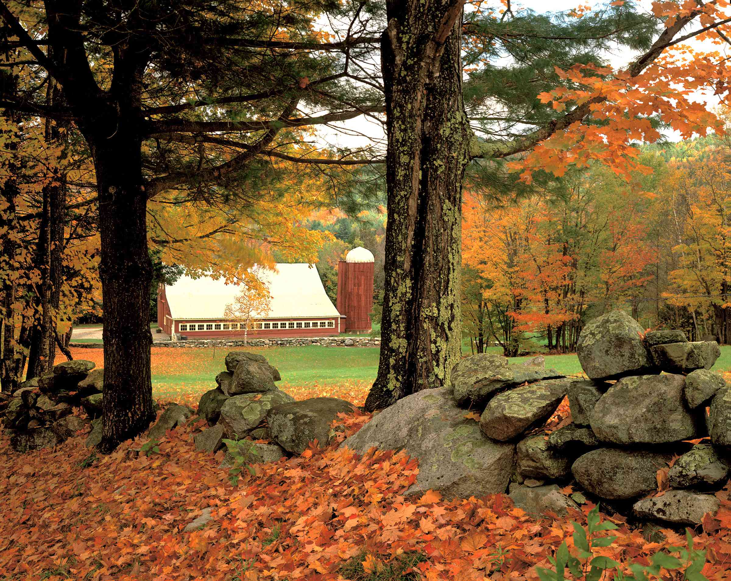 A red barn in the distance peeks between autumn sugar maple trees alongside an old stone wall covered with fall leaves.